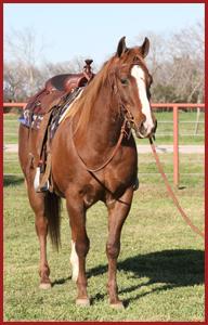 Horses - Santa Elena Ranch