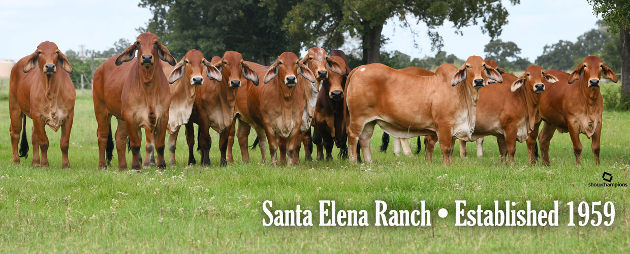 Welcome to Santa Elena Ranch!